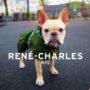 RENE-CHARLES: NYC: LITTLE BULLDOG IN THE BIG CITY - EVAN CUTTIC, RYAN NALLS